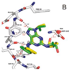 Roscovitine-CDK2